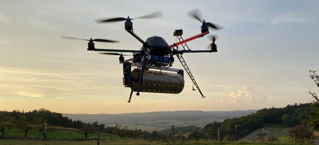 Drohne_Florfliege